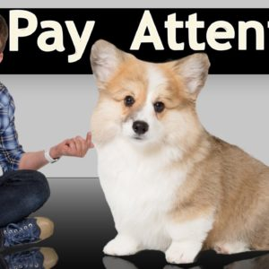 How to Teach your Puppy to INSTANTLY Sit Still and Pay Attention