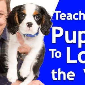 How to Train your Puppy to Love the Vet!
