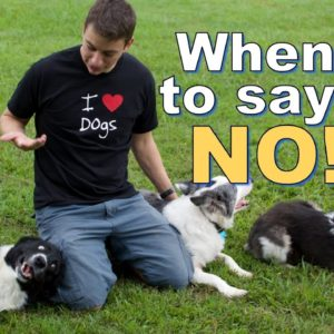 "How, When and Why I say ""NO"" to my dogs."