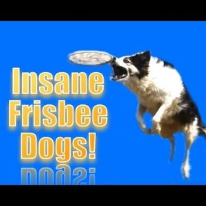 INSANE FRISBEE DOGS!