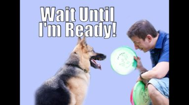 """""""My Dog Won't Let Me Pick Up The Toy!"""" This is what you're doing wrong!"""
