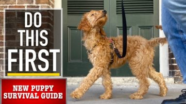 NEW PUPPY SURVIVAL GUIDE: Leash Walking Begins! (EP 4)