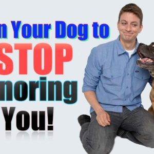 How to Get Your Dog to STOP IGNORING YOU: 2 Unexpected Dog Training Tips
