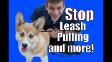 Stop Leash Pulling AND MORE!