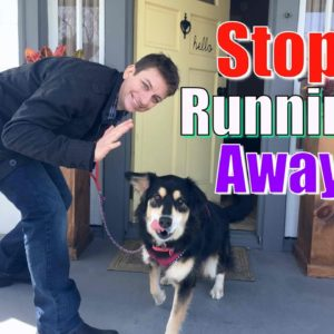 How to STOP Your Dog From Running Out of the Front Door! Stay while Distracted