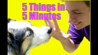 Teach Your Dog 5 Things in 5 Minutes!
