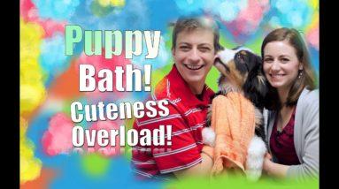 Teach YOUR Dog to LOVE Getting a Bath!
