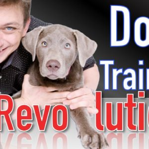 The Future of the Dog Training Revolution