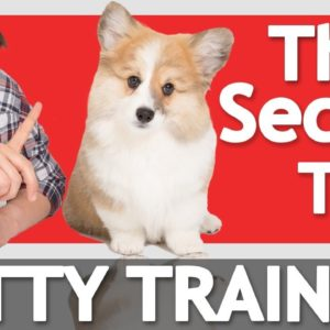 The Secret to Potty Training your Puppy!