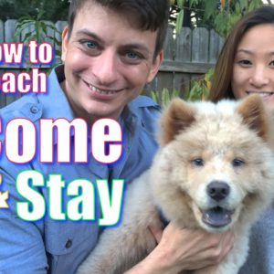 The Secret to Teaching Your Dog COME and STAY