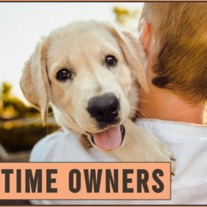 Top 10 Dog Breeds For First Time Dog Owners