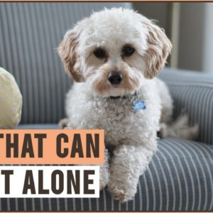Top 10 Dogs That Can Be Left Alone