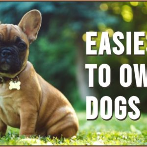 Top 10 Easiest Dog Breeds To Own