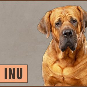 Tosa Inu Dog Breed Information