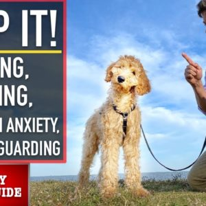 NEW PUPPY SURVIVAL GUIDE: How to EASILY STOP These 4 Puppy Problems NOW! (Ep 6)