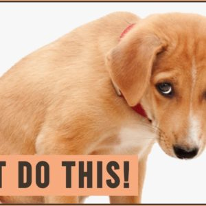 What Dogs HATE The Most - Worst 10 Things