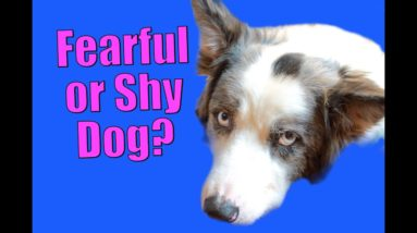 What to Do If Your Dog Gets Nervous and more!