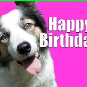 What to do on Your Dog's Birthday:)