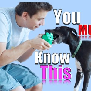 You MUST UNDERSTAND THESE THINGS to Have a Well Trained Dog!