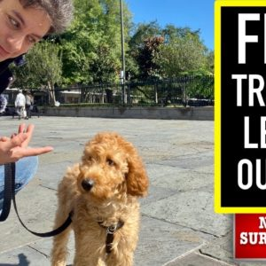 NEW PUPPY SURVIVAL GUIDE: This is How I Train EVERY DOG to LISTEN When They WON'T