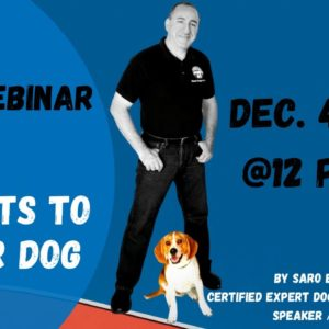 3 Easy Mindsets To Better Dog FREE Webinar