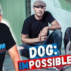 Dog: Impossible season 2 | Interview & Preview With Matt Beisner