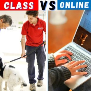 Dog Training Class VS Online Dog Training Course