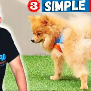 How To House Train A Puppy Fast In 3 Steps #shorts