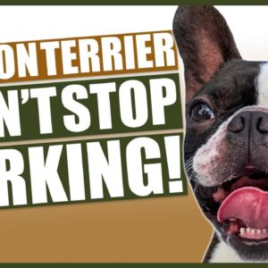 How To Stop Your BOSTON TERRIER Barking
