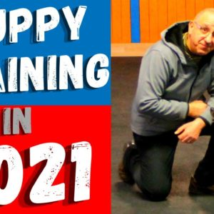 How To Train Your Puppy Without Treats In 2021