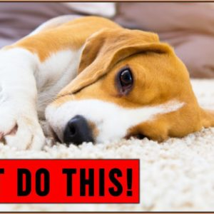 Human Behaviors That Dogs Hate | DONT Do This!