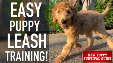 NEW PUPPY SURVIVAL GUIDE: How To Leash Train Your Puppy!