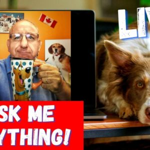 Saro Dog Training Q&A Session | Ask Me Anything! Oct. 23/2020