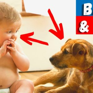 Should you allow your dog to be involved with your baby or your child