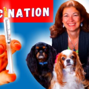 Should You Vaccination Your Dog | Talk with Dr. Judy Morgan Part 2