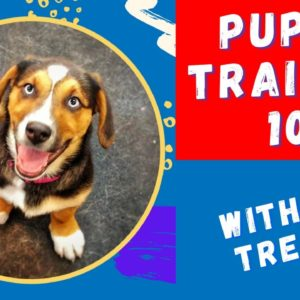 Teach Puppy Training Without The Use Of Treats