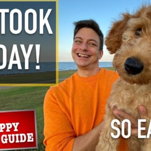 How I'm Training THIS PUPPY to Be Good Around EVERYTHING! New Puppy Survival Guide EP 10