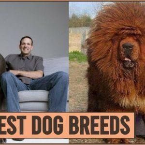 Top 10 Heaviest Dog Breeds