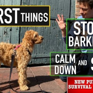 NEW PUPPY SURVIVAL GUIDE: How to Start Training ANY Dog to STOP Barking, Calm Down & Stay! (EP: 7)