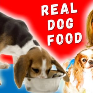 What Is The Right Diet For Dogs with Dr. Judy Morgan