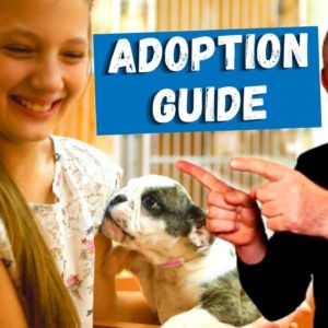 How To Adopt A Dog: A Complete Guide For 2021