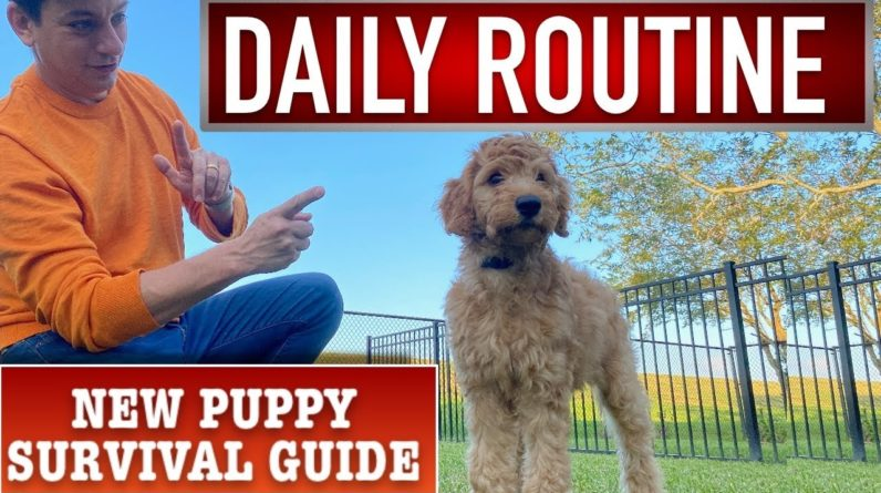 Daily Puppy Training Routine! NEW PUPPY SURVIVAL GUIDE (Ep 13)