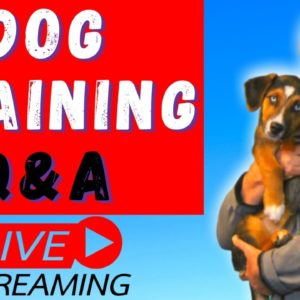 Dog Training BASICS for Puppies & Adult Dogs