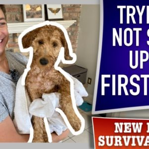 How To NOT Totally Screw Up Your Puppy's First Bath! (EP 14)