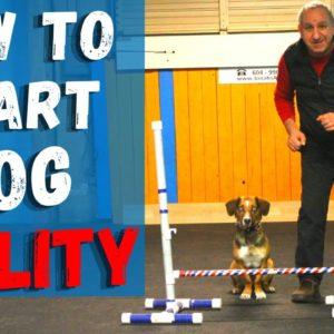 Teach Basic AGILITY To Your Dog | How To Start Agility Training