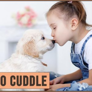 Top 10 Dogs That Love To Cuddle
