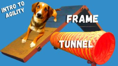 Dog Agility Training Equipment Frame and Tunnel