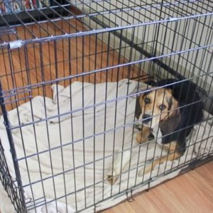 Dog Crying in Crate? Here's What To Do