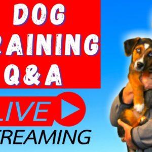 Dog Training Q&A With Expert Dog Trainer Saro Dog Training
