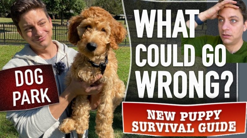 I'm Taking This Puppy to a Dog Park for Training. What Could Go Wrong? (NPSG EP. 19)